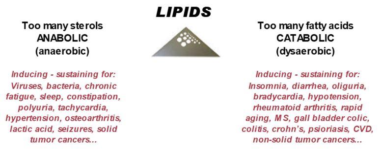 flow-lipids